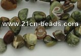 CCH637 15.5 inches 6*8mm - 10*14mm rhyolite gemstone chips beads