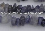 CCH659 15.5 inches 5*8mm - 6*10mm iolite gemstone chips beads