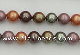 CSB312 15.5 inches 8mm round mixed color shell pearl beads